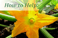 Support the Farm and Garden Trust